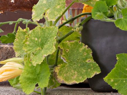 Gardening II